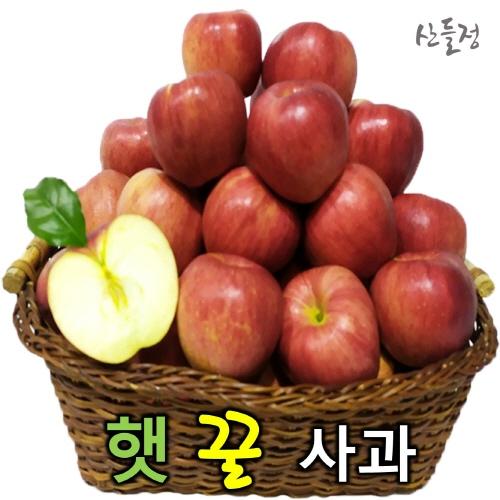 경북사과 햇 꿀 빨간사과10kg 5kg 3kg [산지직송] 산들정, 1box, 01. 사과 3kg (11~15과 내외) 가정용 흠과