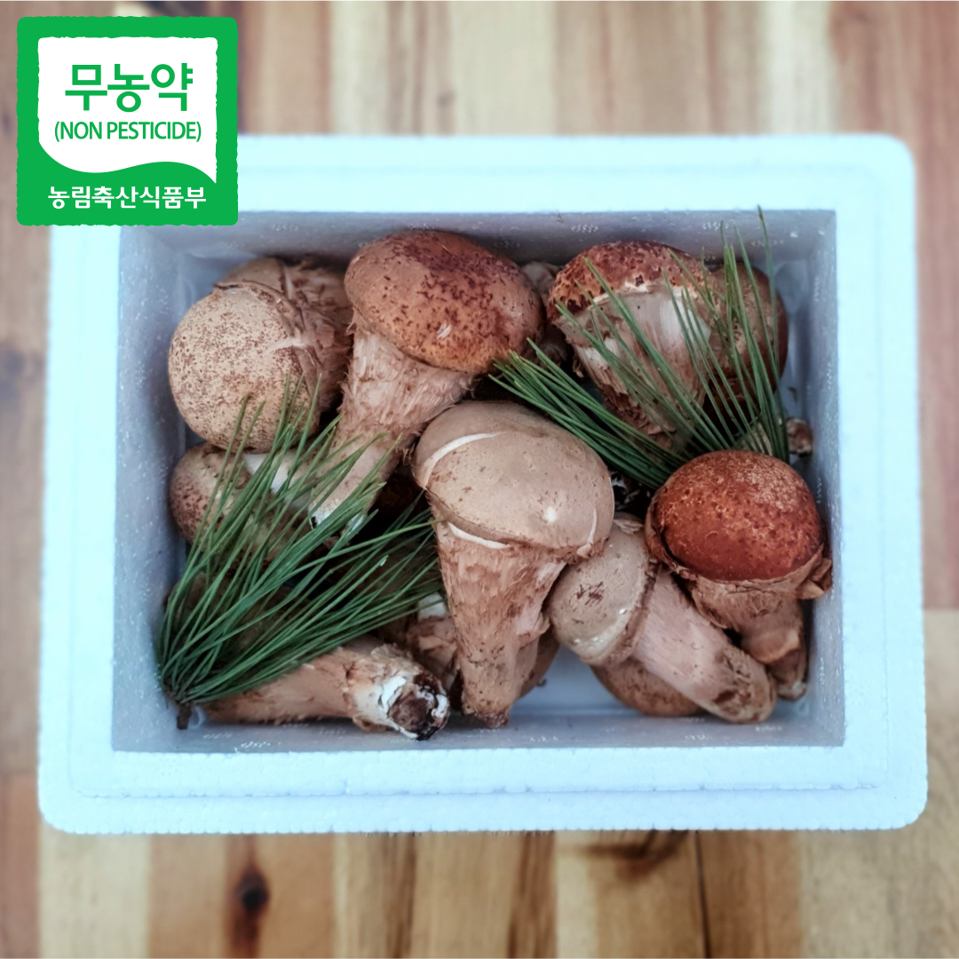 [참송이]직접재배 산지직송 친환경 참송이버섯 재료용/구이용 300g, 재료용 300g