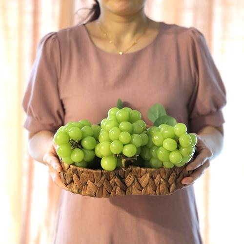 [산지직송] 달고나맛 씨없는 망고포도 샤인머스켓 고당도 프리미엄 청포도 1kg 1.3kg 2kg 4kg, 1박스, 1.3kg 프리미엄 샤인머스켓 (2송이)