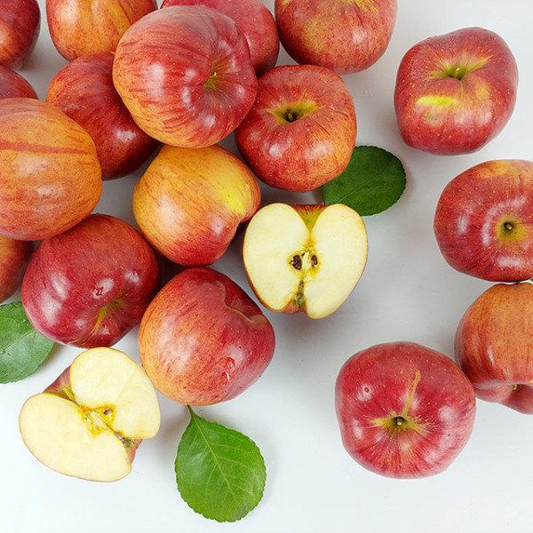 [더조은푸드] 경북 햇 홍로 사과 가정용 10kg 48-51과, 상세 설명 참조