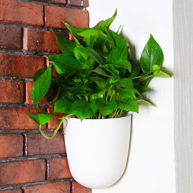 에버라인 코너 벽걸이 인테리어 화분, 화이트