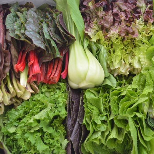 팜 유기농 모듬 쌈채소 1kg 당일수확 농가배송, 1개