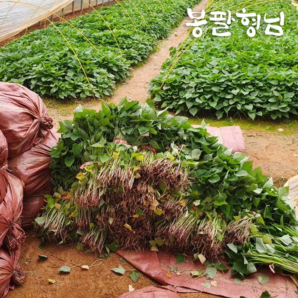 [봉팔형님] 꿀 고구마모종 고구마순, (꿀)1박스, 1kg