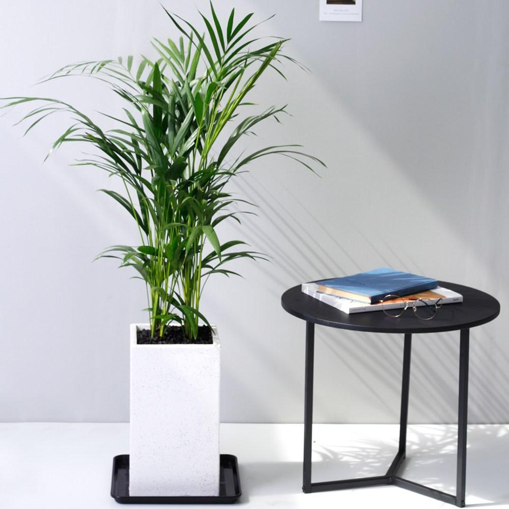 아침향기 공기정화식물 대형화분 FRP 화기 화분 - 아레카야자 90cm, FRP 화이트 아레카야자(90cm~), 1개