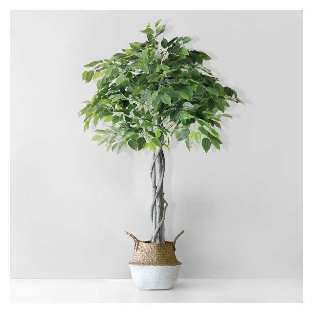 [천삼백케이] [블루밍앤미] 벤자민 인테리어 조화 나무(150cm), 추가 안함