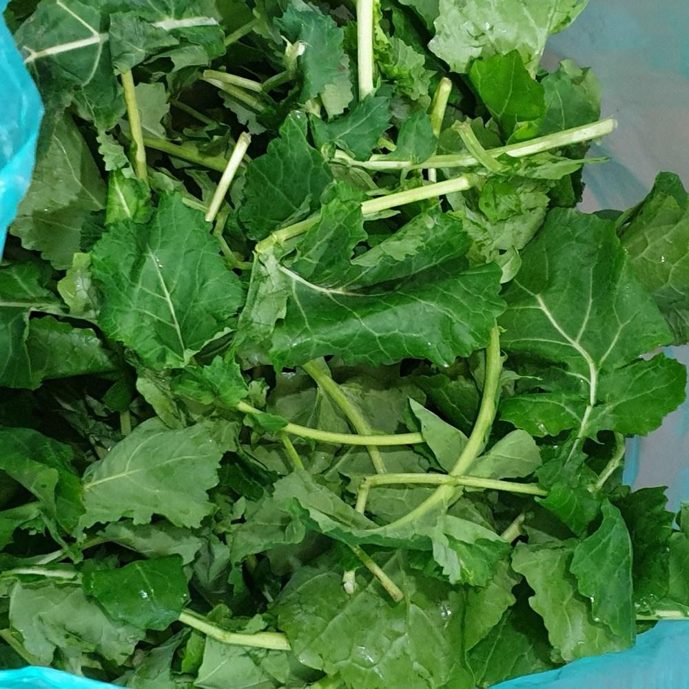 유채 나물 1kg 2kg 겨울초 생 동초