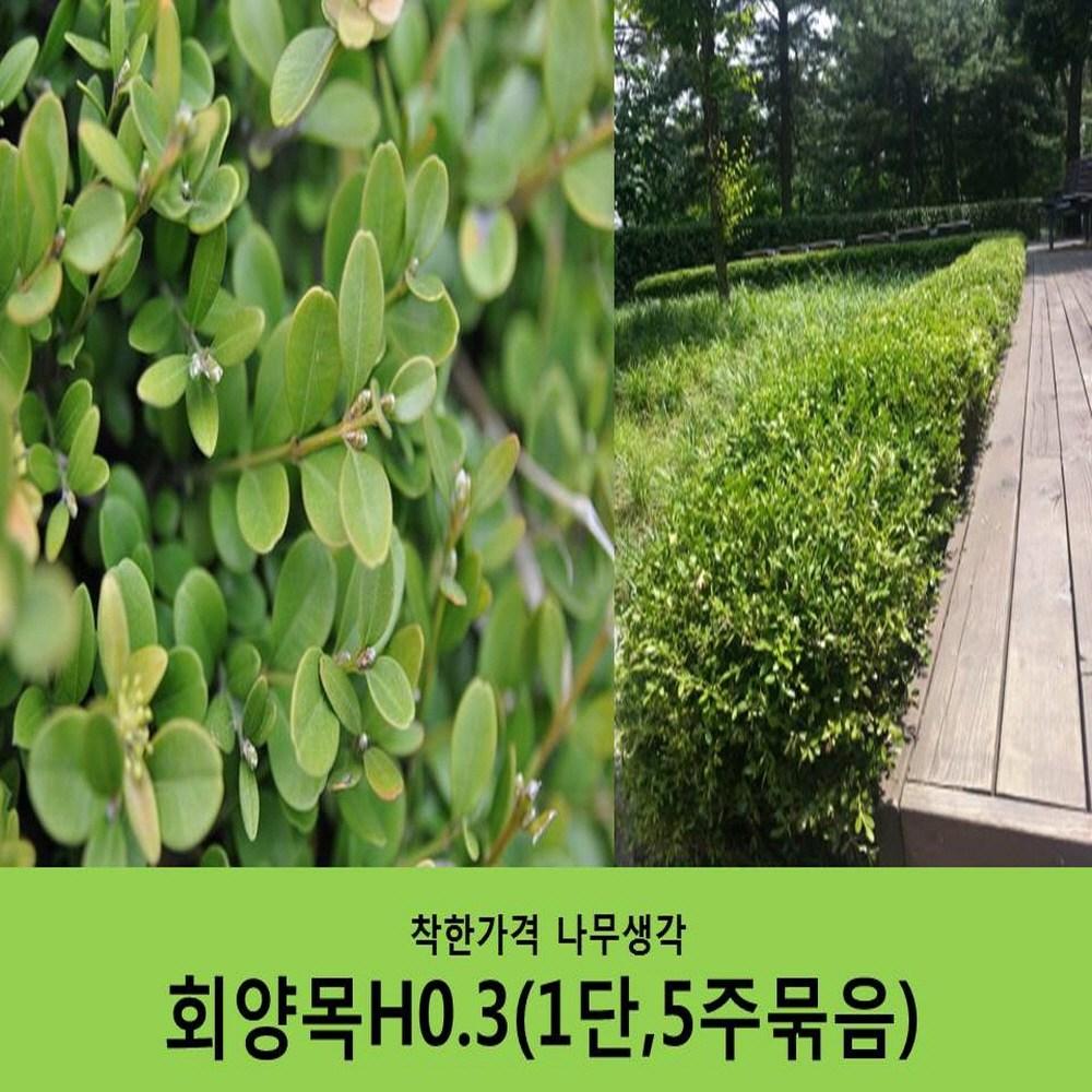 착한가격 나무생각 회양목H0.3 (1단5주묶음)