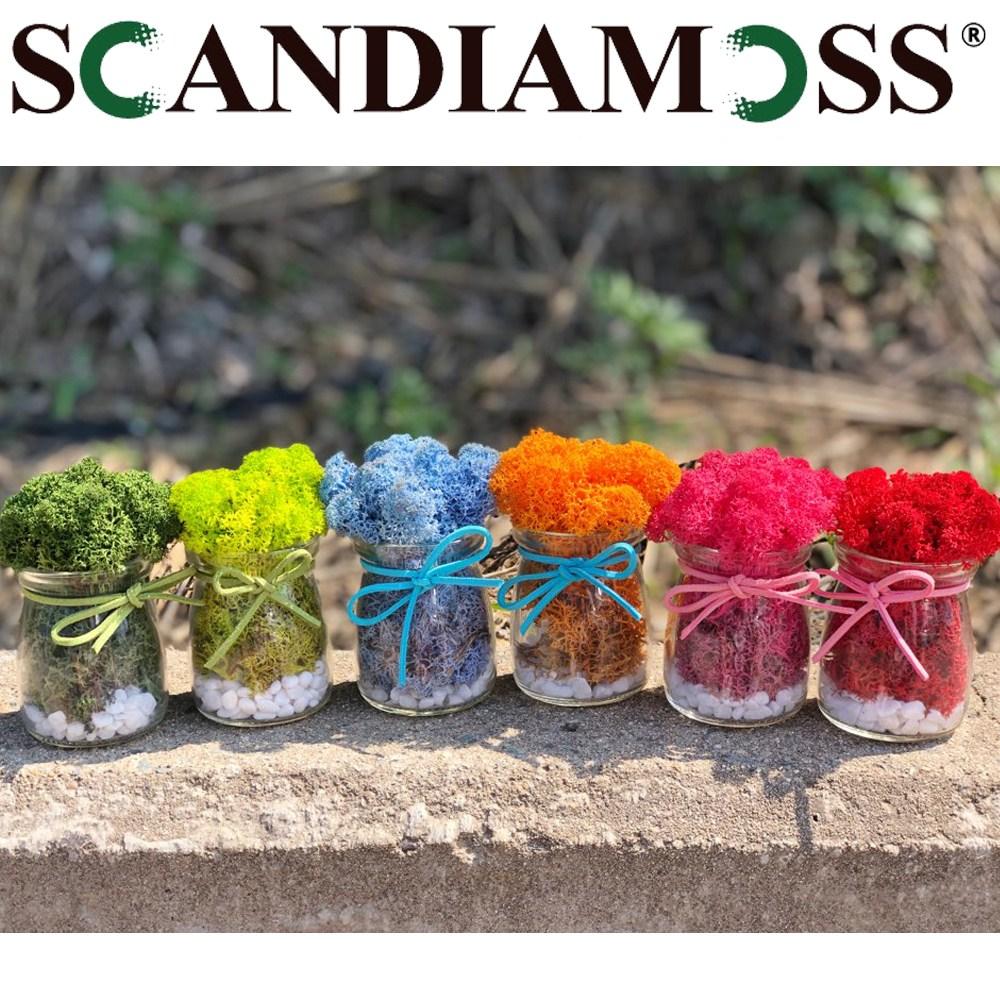 스칸디아모스 맑은원형 6종세트 공기정화식물 자연이끼 습기제거