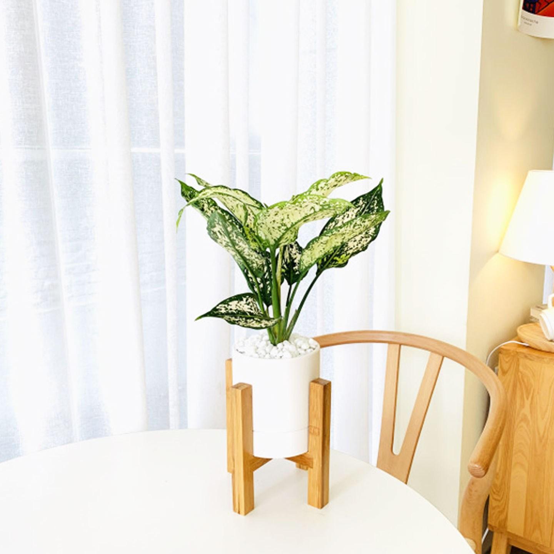 앙플랜트 우드스탠드 소품 공기정화식물 set, 스노우사파이어소품/플라스틱 기본 포트