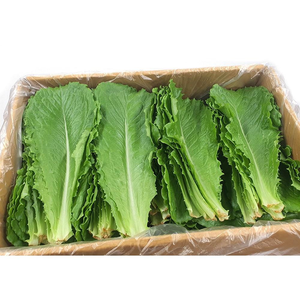 야채왕 로메인 상추 2kg 로메인 레터스 양상추 상추