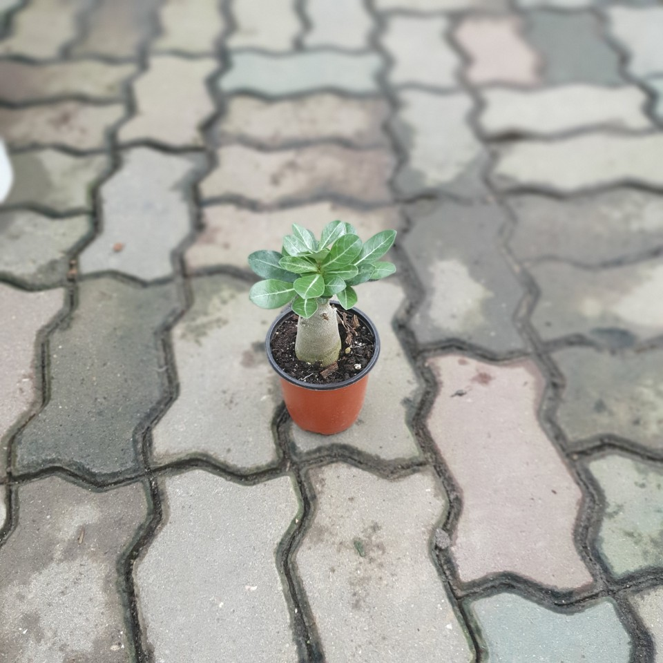 석화 소품 다육식물 선인장 10~25cm 29