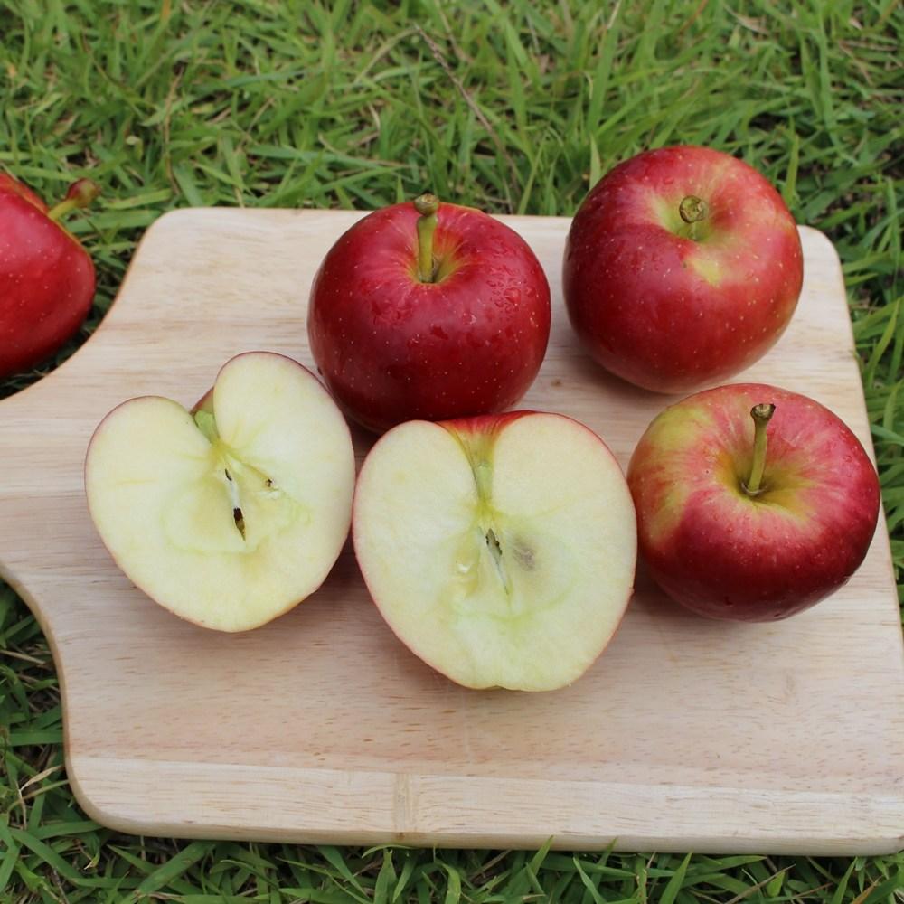[청년감별사]사과 경북 꼬마 작은 애플 미니 사과 2kg 옵션선택, 2k