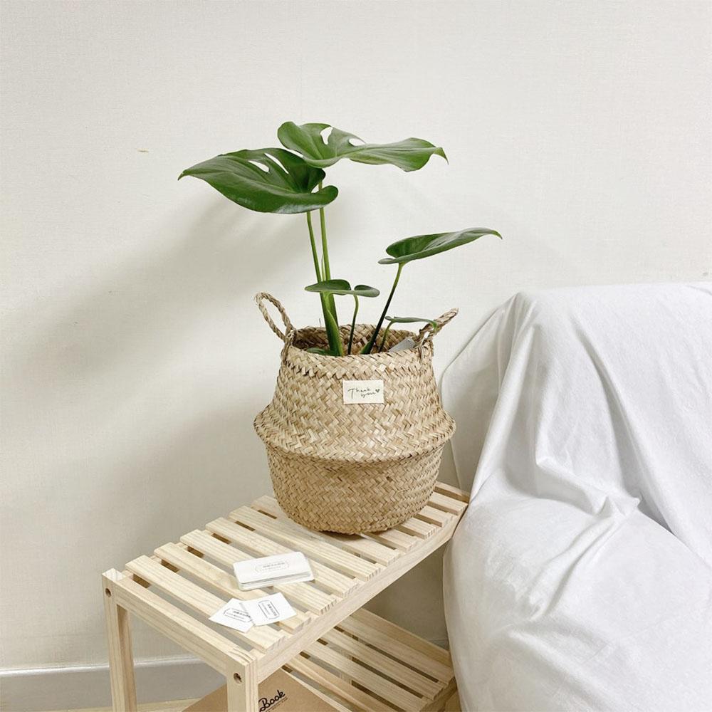 몬스테라 몬스테리아 집에서키우기쉬운 좋은 그늘에서잘자라는 반음지 공기정화식물 집들이 개업 선물 인테리어식물, 선택안함(모종)