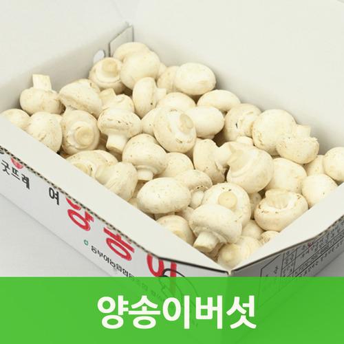 양송이버섯1kg 국내산 양송이(보통1kg) 싱싱지오, 양송이버섯(보통1kg)