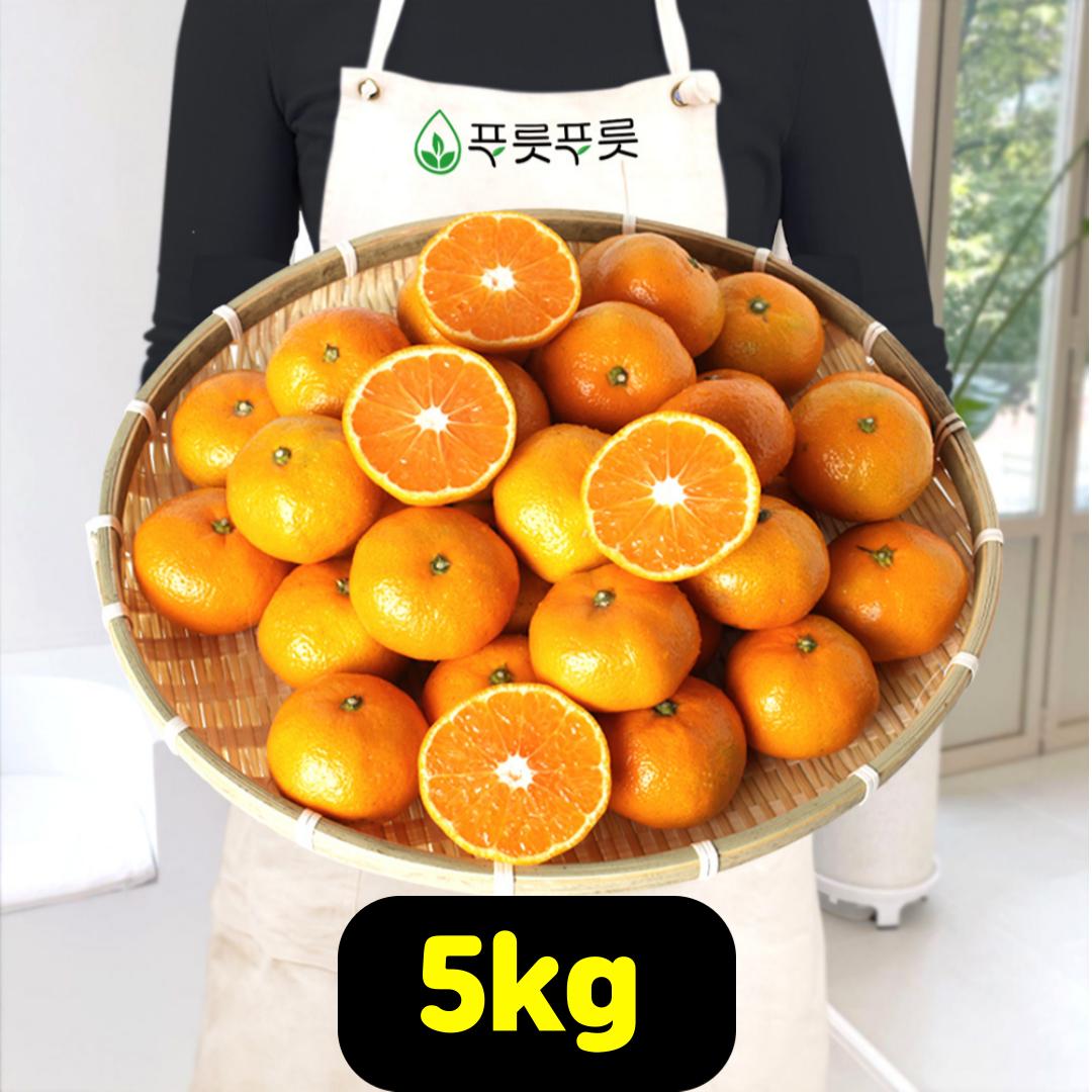 푸릇푸릇 2020년 귤 제주 황금향 제주도귤 노지감귤 극조생귤 5kg 10kg, 제주감귤, LL사이즈