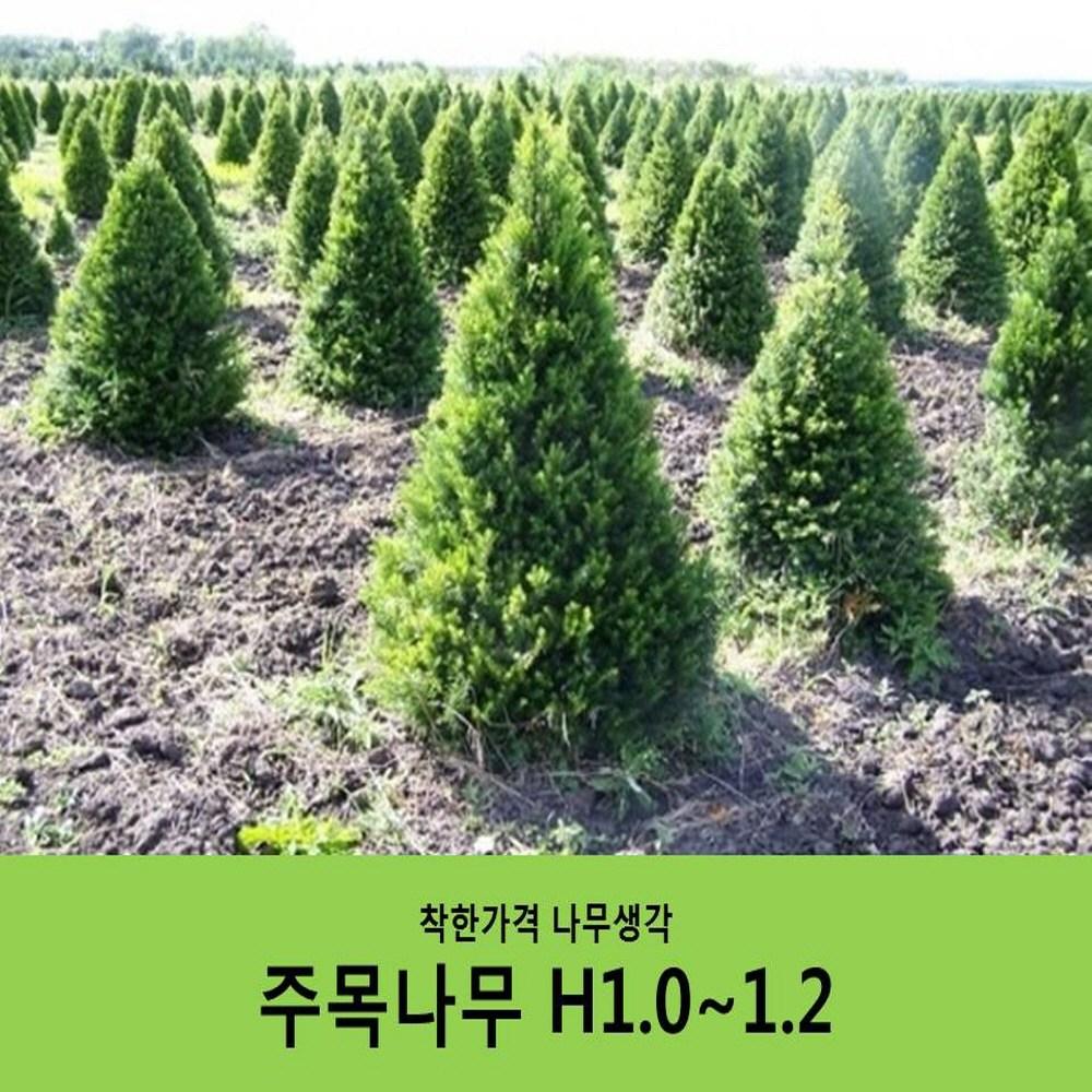 착한가격 나무생각 주목나무H1.0~1.2(1m~1m20cm)
