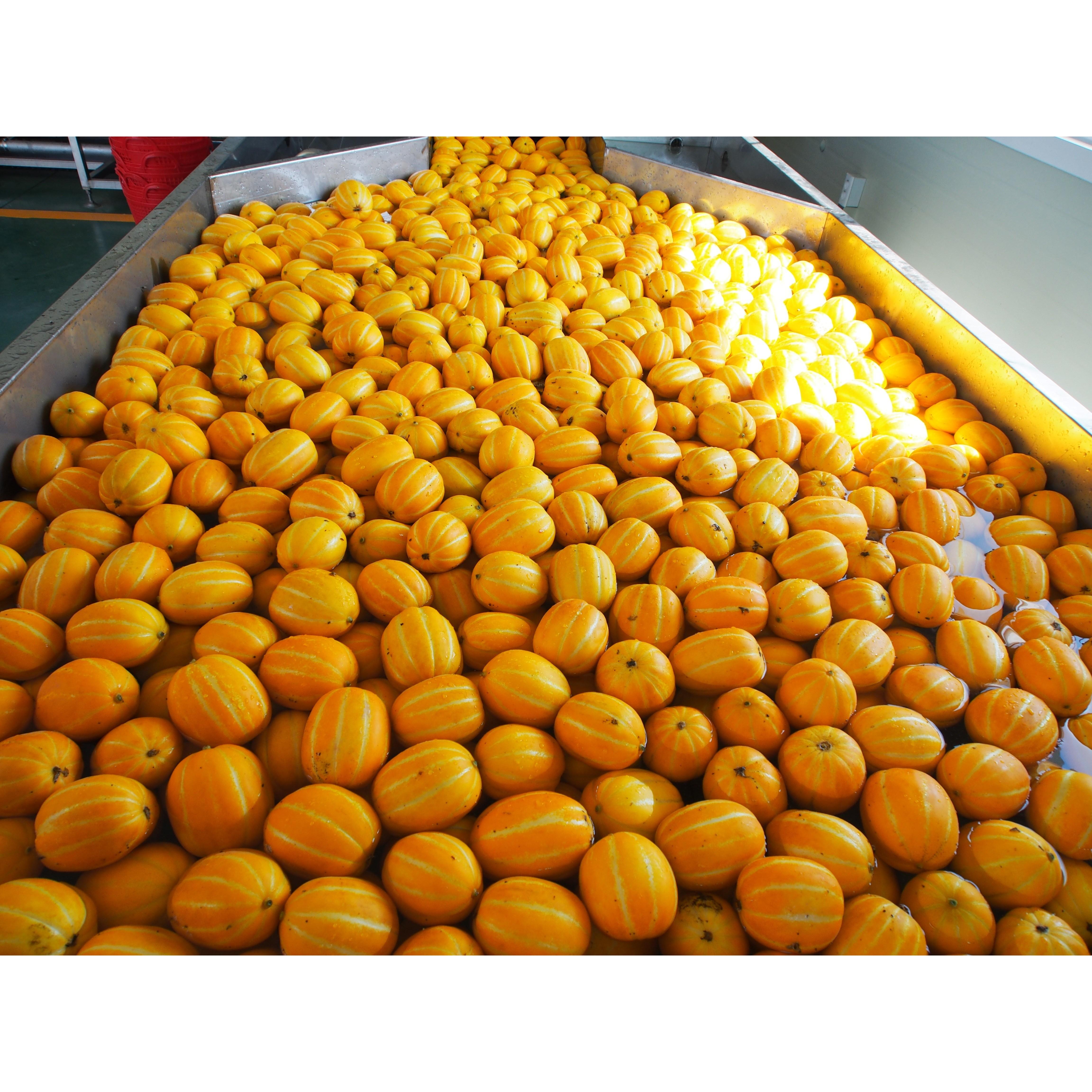 산지직송 꿀 성주 참외 달콤한 1kg 2kg 3kg 4kg 5kg 소과 중과 특과, 1. 참외 중과 3kg