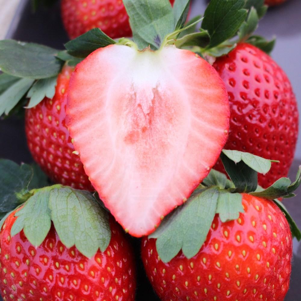 [감별] 홍성 대왕 아리향 딸기 생딸기 선물세트, 700g이상