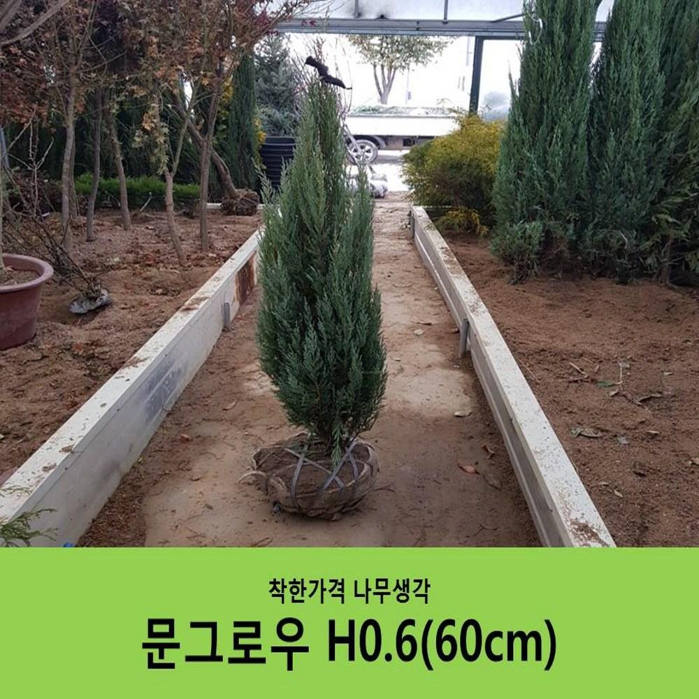 착한가격 나무생각 문그로우H0.6(60cm)