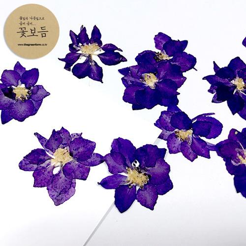 그린팜네이처 꽃보듬 압화-락스퍼, 파랑
