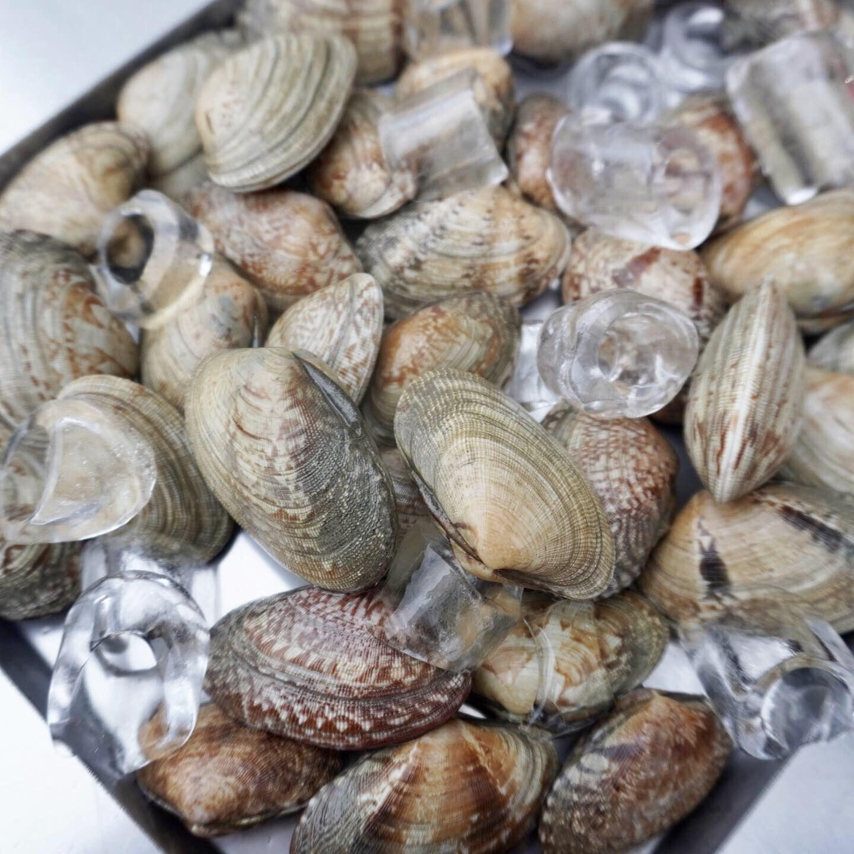 바다의 품격 남해안 명품 세척 바지락 1kg, 1box
