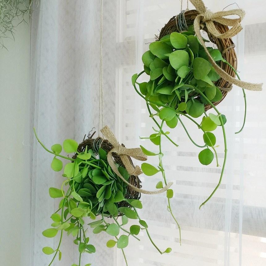 따랑 실내 공기정화식물 디시디아 행잉플랜트