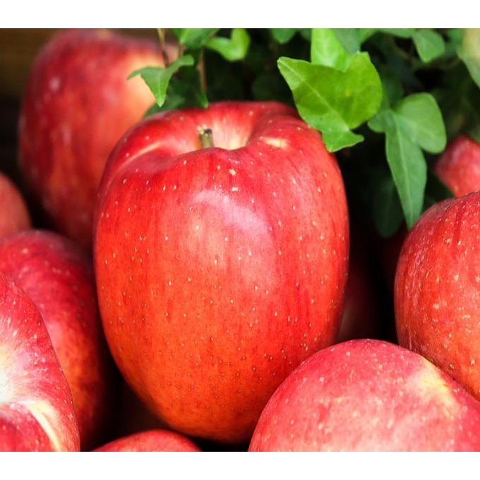 경북 못난이 맛있는 꿀 흠집 햇 홍로 사과 6kg/8kg, 홍로사과소과, 1, 8kg