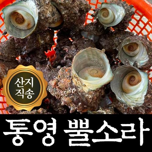 깨끗한 통영 뿔소라 홍 가리비 석화 굴 찜용 1kg 3kg 5kg, 1개, 뿔소라 1kg
