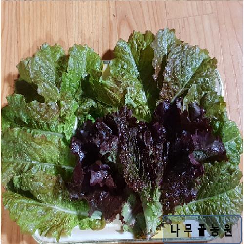 남원 나무골농원 적상추(600g 1kg 2kg 4kg), 1박스, 600G