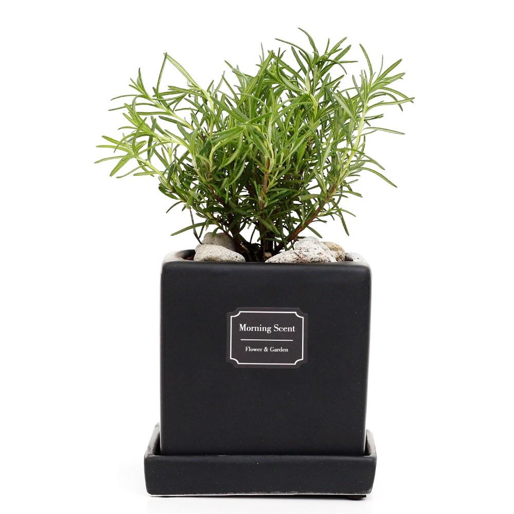 아침향기 공기정화식물 무광 사각 화분, 1개, 무광사각 블랙 로즈마리