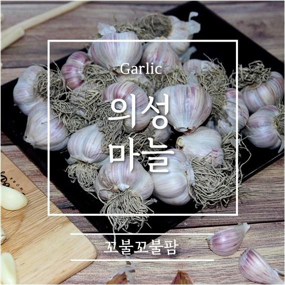 의성 (토종)육쪽마늘, 1개, 한접