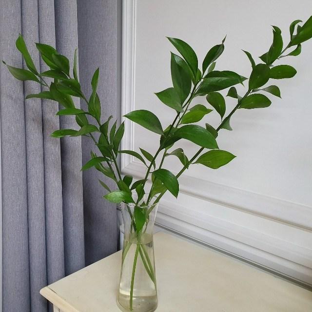 [플라라] 생화 루스커스 유스커스 수경재배식물 그린잎 소재, 01. 루스커스 생화