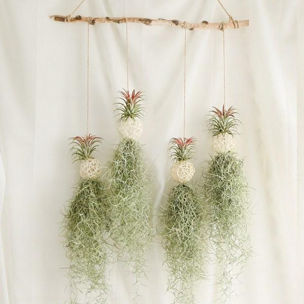 갑조네 틸란드시아 디시디아 먼지먹는식물 공기정화식물, 03 화이트볼 틸란(4개)+자작나무+가랜드마끈(135cm)