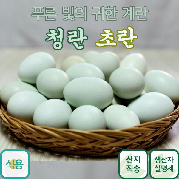 금강초계 청란 초란 30란 어린닭이 낳은 청계란 청계알, 30개