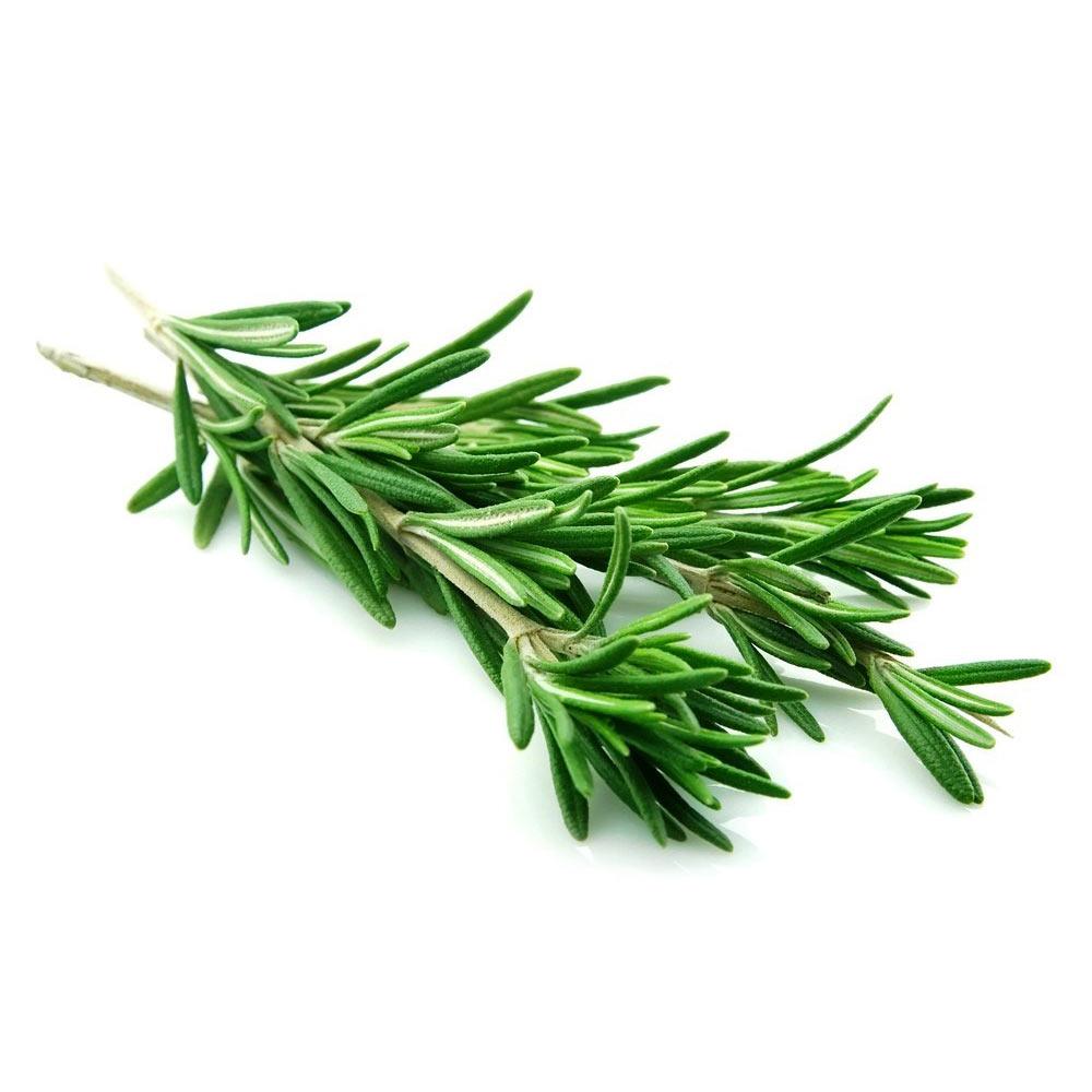 로즈마리 허브 생잎 100g 요리 칵테일 장식용, 로즈마리 100g
