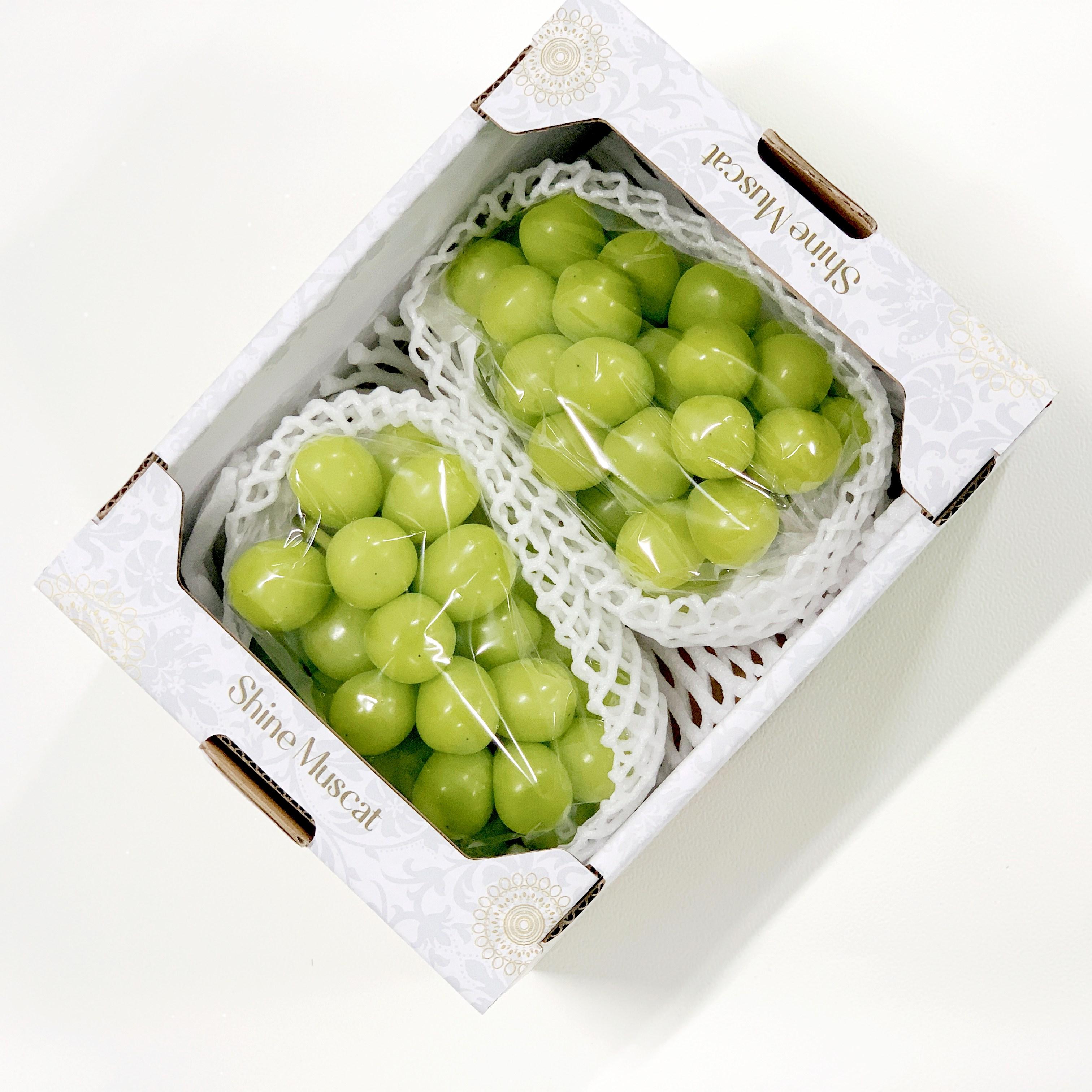망고 포도 청포도 샤인머스켓 명절 선물세트 1.5kg 1.8kg 2kg 800g, 프리미엄 1.5kg(2-3수)