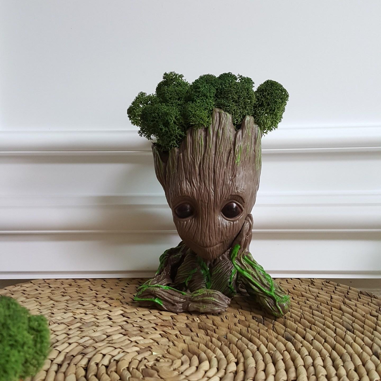 Fondant Flower 그루트화분 이오난사 공기정화식물, 캐릭터화분+천연이끼 스칸디아모스(그린)