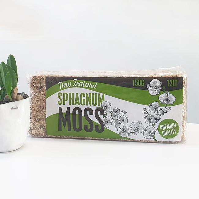 식물시간 sphagnum moss 뉴질랜드 프리미엄 수태