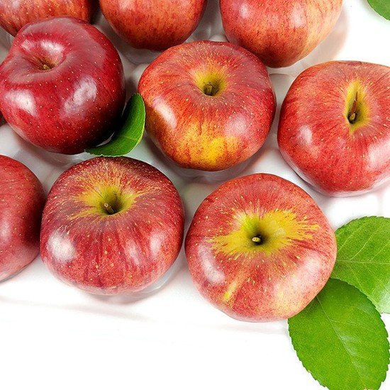 경북 햇 홍로 사과 가정용 5kg 19-21과, 없음, 상세설명 참조