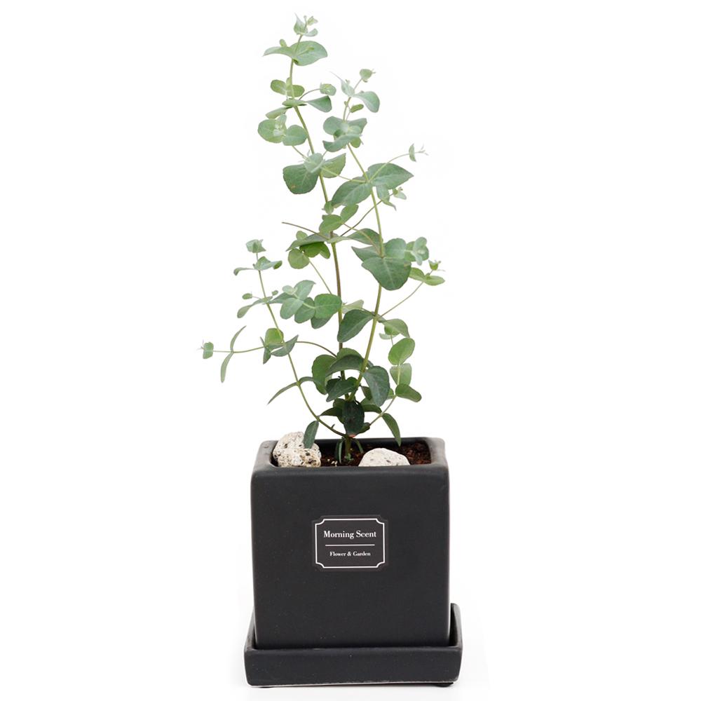 아침향기 공기정화식물 무광 사각 화분, 1개, 무광사각 블랙 유칼립투스