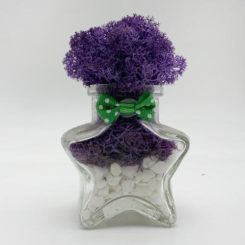 스칸디아모스 공기정화 식물 천연제습제 별화분모스, 퍼플