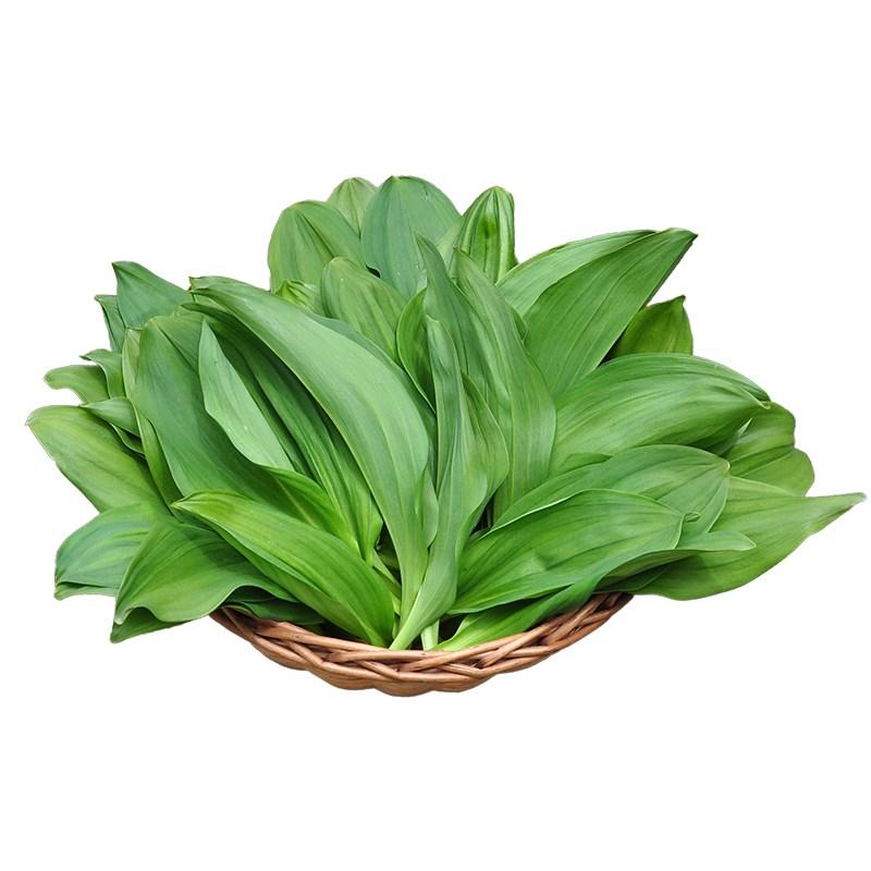 숲과숲사이 국내산 소백산 산마늘 잎명이 생채 명이나물 1kg (4/1부터 출고), 명이나물(잎명이) 1kg