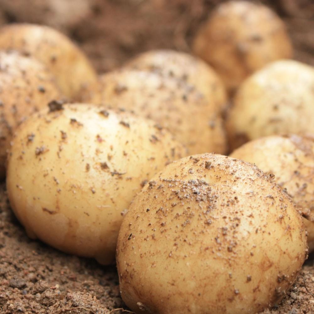 이웃사촌판매자 햇 감자 5kg 10kg 단골많은 집, 1박스, 햇 감자 5kg 대(찜용 계란크기)