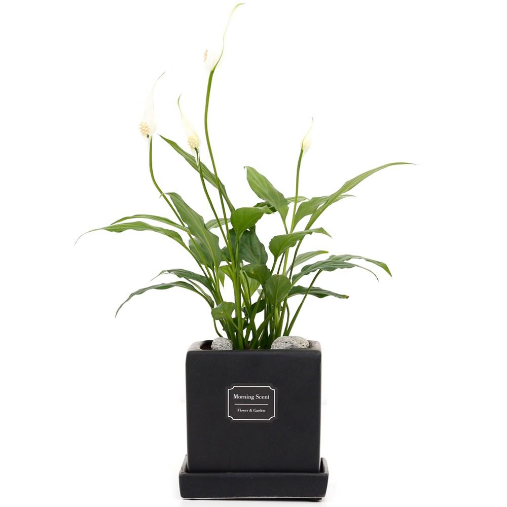 아침향기 공기정화식물 무광 사각 화분, 1개, 무광사각 블랙 스파트필름