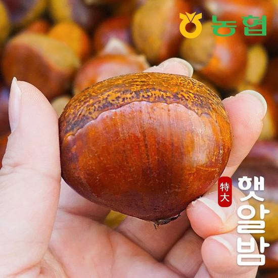 [농협] 토실토실 고소한 순창 알밤 특대 1kg 햇밤, 햇알밤 특대 1kg, 상세설명 참조