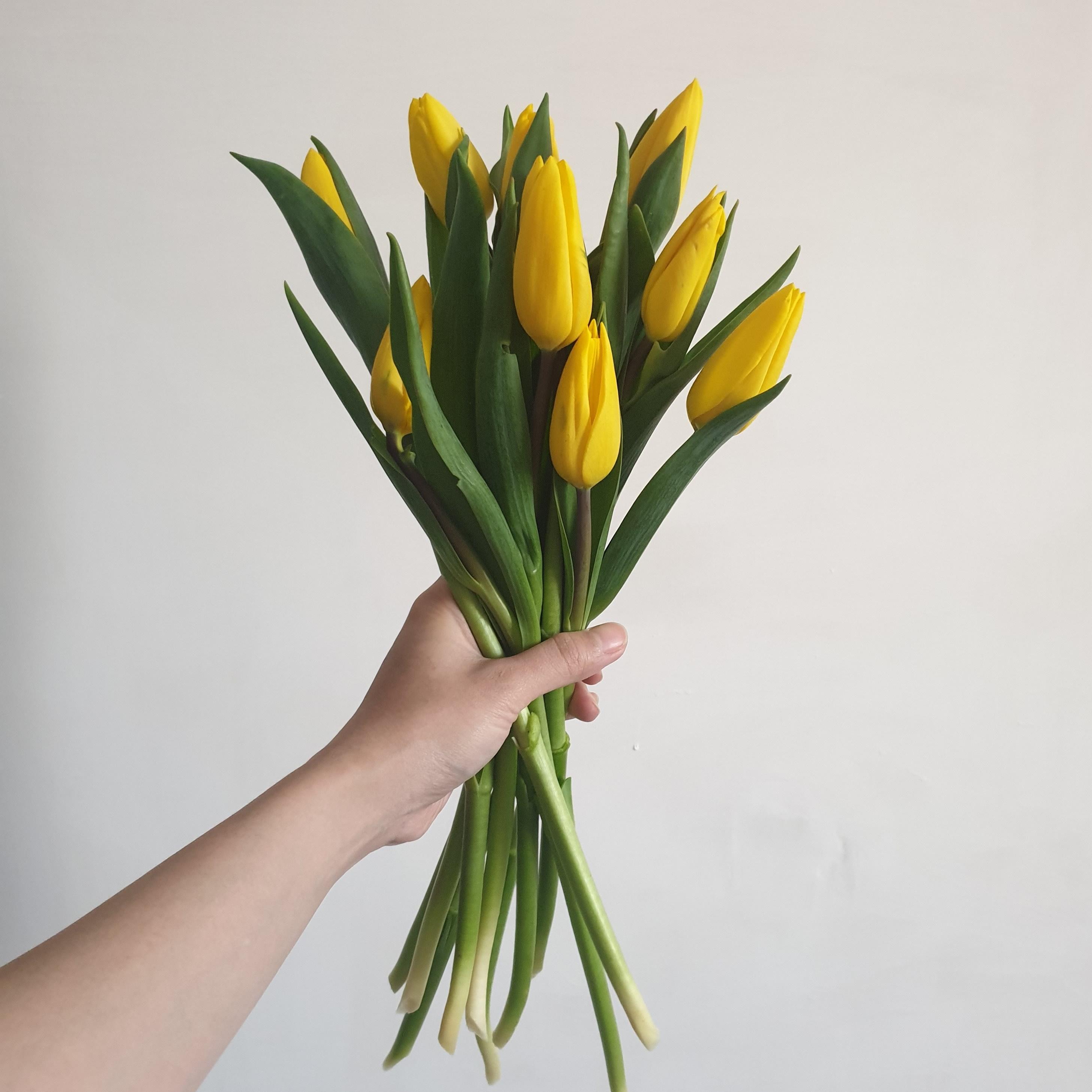 다이아몬드릴리(Diamondlily) 내방에 튤립 한단 노랑 옐로우 생화 꽃다발, 생화만구매
