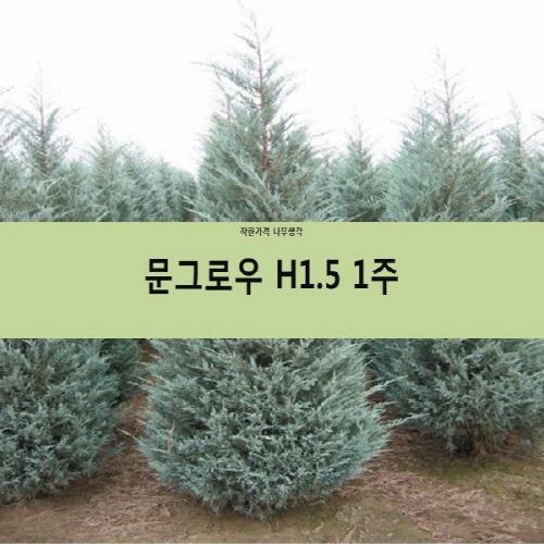 착한가격 나무생각 문그로우 모음, 문그로우 H1.5