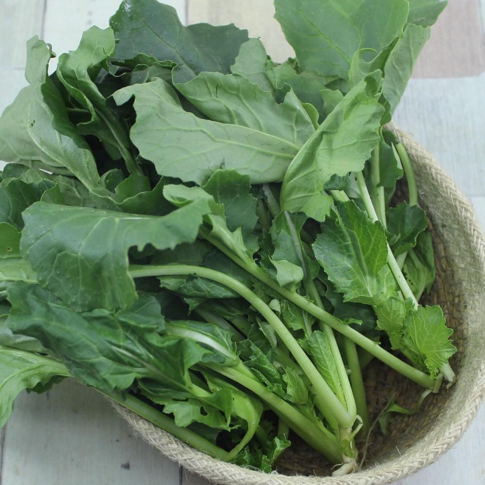 남해에서 해풍맞고 자란 나물채소 겨울초500g, 1box, 500g