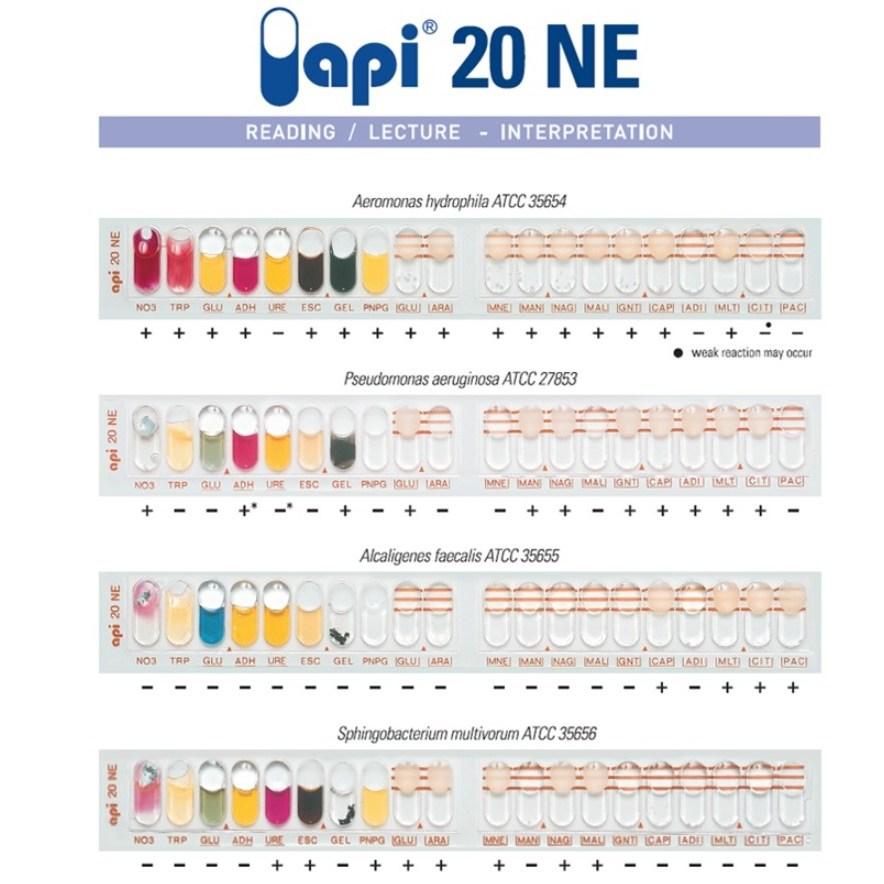 API NaCl 0.85% medium 2ml /생화학실험 보조시약 BF-432