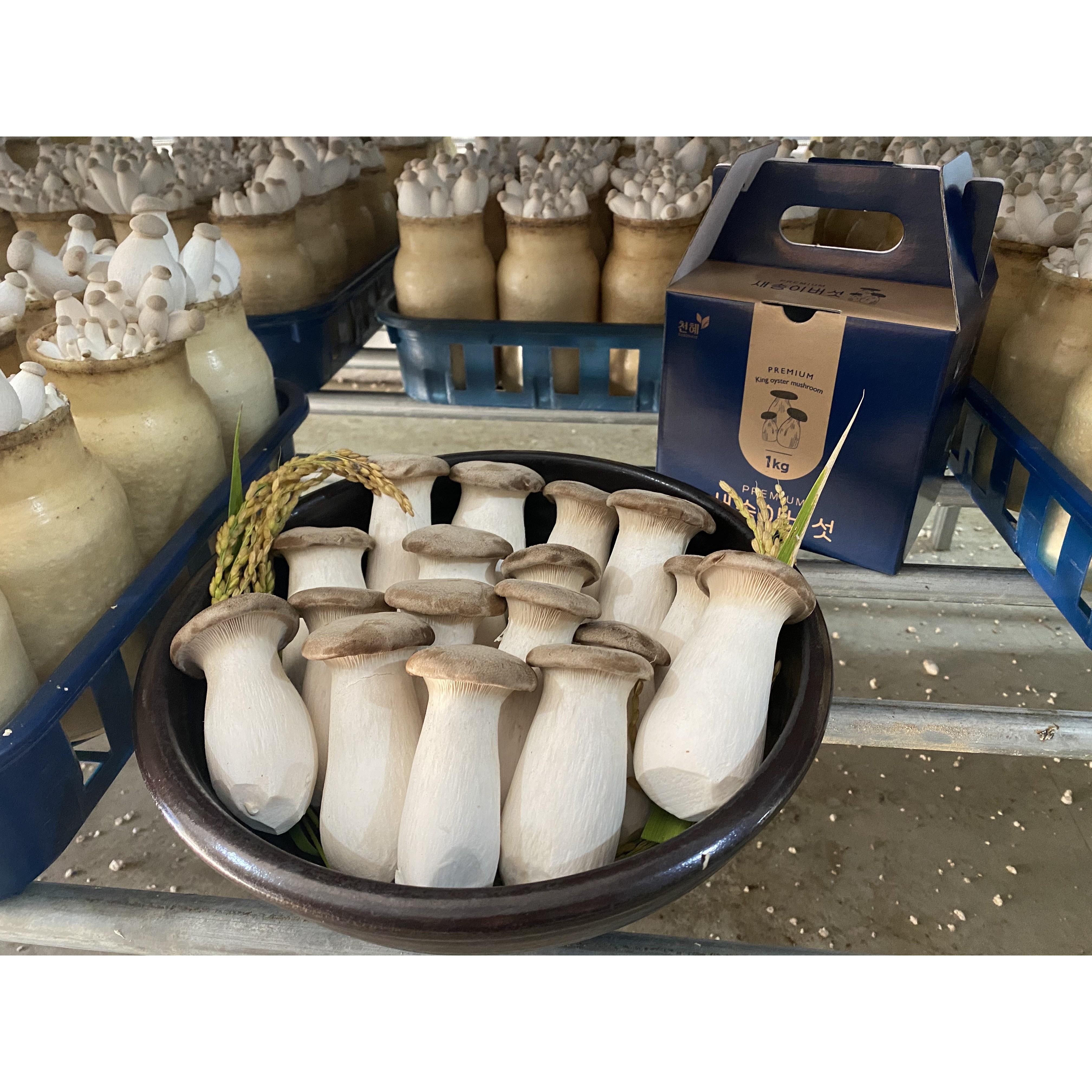 국내최초 Global GAP 인증 받은 프리미엄새송이 버섯!!!